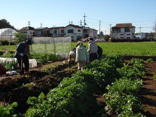 d397c5367a □武蔵野農業ふれあい村 Website□